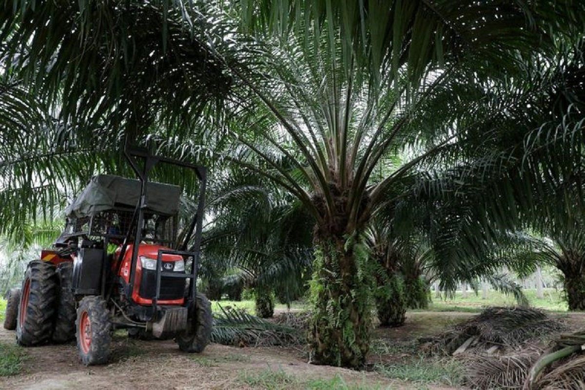 原棕油价格升破4700 种植股应声扬